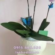 chau-ho-diep-hong-3-canh (2)