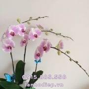 chau-ho-diep-hong-3-canh (3)