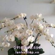 chau-ho-diep-trang-phong-thuy (2)