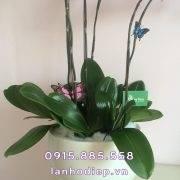 chau-hoa-lan-ho-diep-thuan-buom-xuoi (3)
