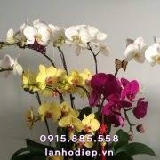 chau-lan-ho-diep-chuc-mung-khai-truong (2)
