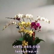 chau-lan-ho-diep-chuc-mung-khai-truong (3)