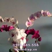 chau-lan-ho-diep-da-sac-de-ban (2)