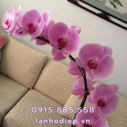 chau-lan-ho-diep-mini-1-canh (2)