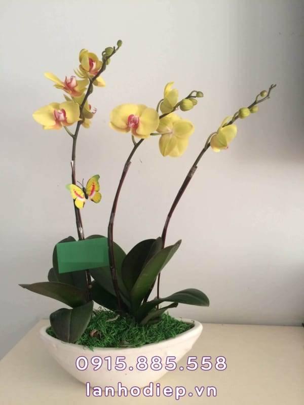 chau-lan-ho-diep-thuyen-hoa-1-600x800 Chậu lan hồ điệp - thuyền hoa