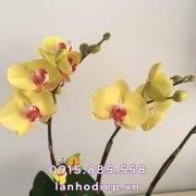 chau-lan-ho-diep-thuyen-hoa (2)