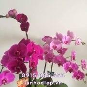 lan-ho-diep-tim-mau-thuy-chung (2)