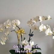 lan-ho-diep-trang-hoa-mung-sinh-nhat (2)
