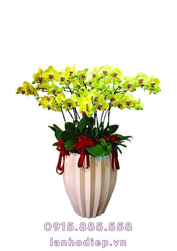 Chậu hoa lan hồ điệp linh linh