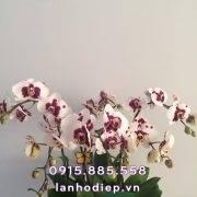 chau-lan-ho-diep-xuan-sang-6-canh (2)