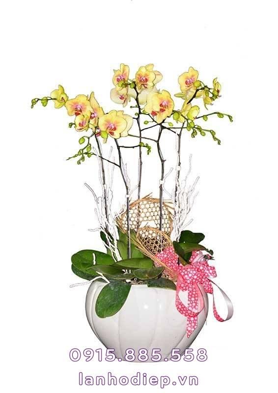 chau-lan-ho-diep-vang-qua-tang-tet-1-566x800 Chậu lan hồ điệp vàng quà tặng Tết