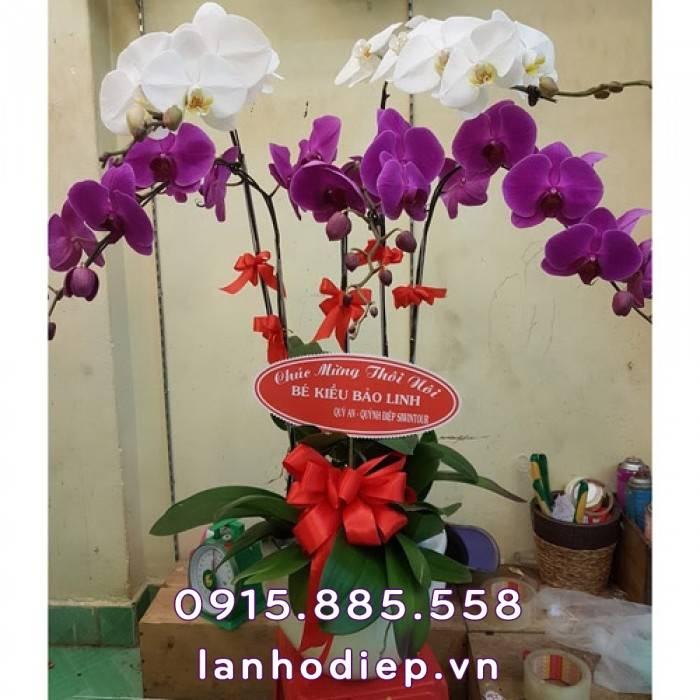 chau-hoa-tang-sinh-nhat-ho-diep-sang-trong Chậu hoa tặng sinh nhật hồ điệp sang trọng