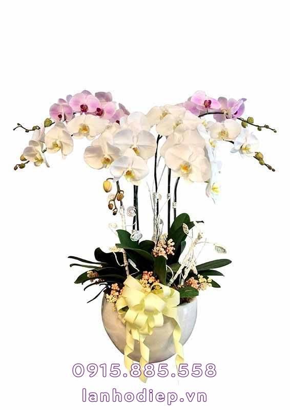 chau-lan-ho-diep-chim-en-mua-xuan-566x800 Chậu lan hồ điệp - chim én mùa xuân