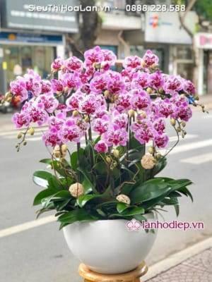 Lan Ho Diep Qua Khai Truong Y Nghia