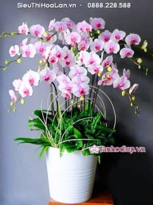 Lan Ho Diep Qua Tang Khai Truong