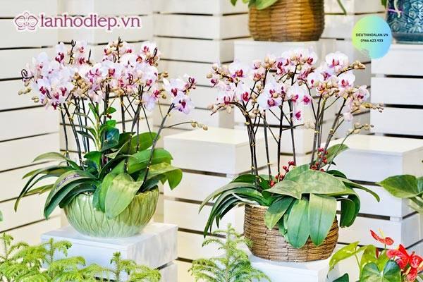 Lan Ho Diep The Hien Tinh Yeu Manh Liet