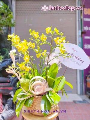 Chậu Hoa Lan Hồ Điệp Vàng Mừng Sinh Nhật