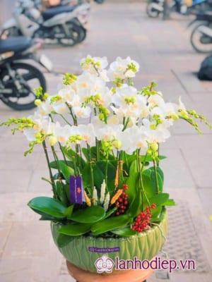 Hoa Lan Hồ Điệp Trắng Mini Mừng Sinh Nhật