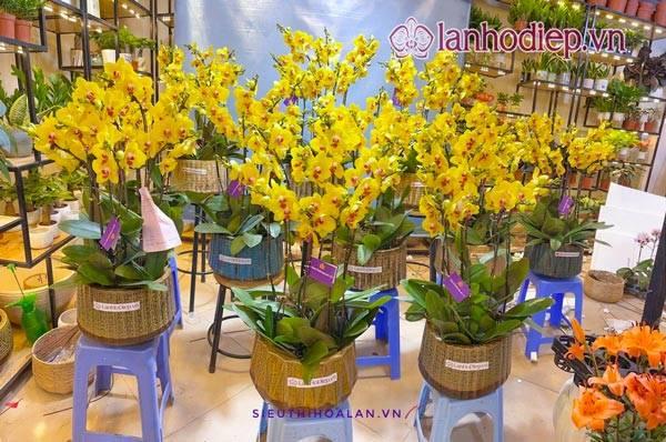 Shop Hoa Lan Hồ Điệp Đẹp Tại Hà Nội