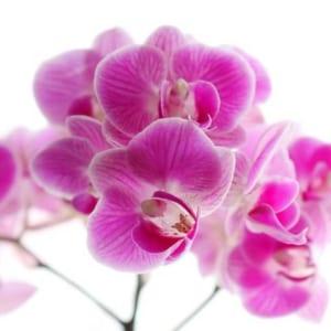 Bông Hoa Lan Màu Tím Mang Vẻ Đẹp Dịu Dàng Và Tinh Tế
