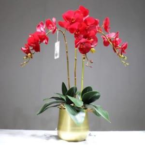 Chậu hoa lan hồ điệp đỏ 3 cành vô cùng nổi bật và ấn tượng