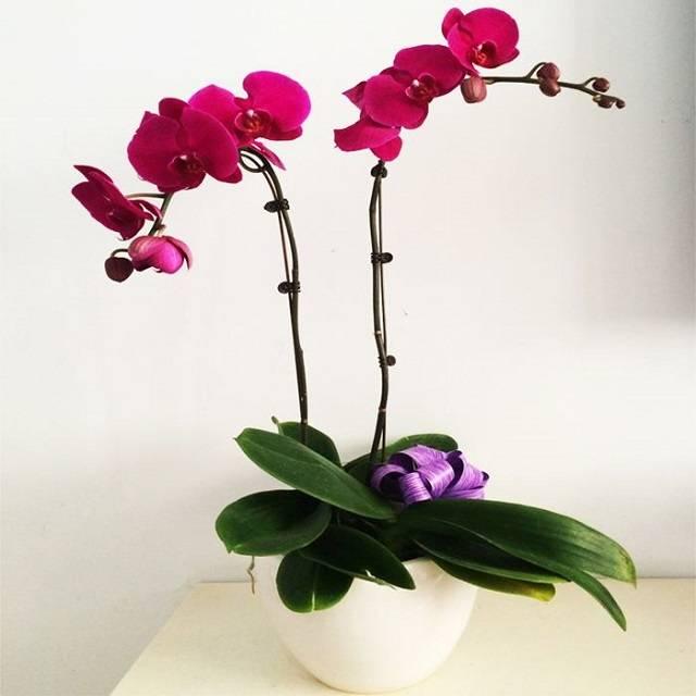 Lan hồ điệp là loài hoa của những điều tốt đẹp
