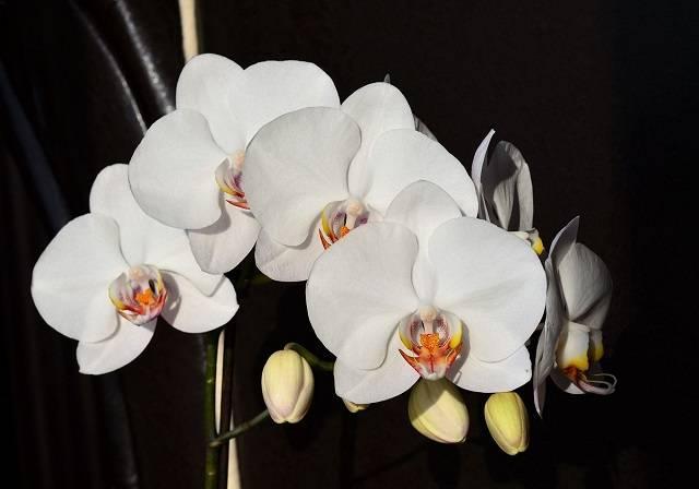 Vẻ Đẹp Của Mỗi Bông Hoa Đều Xứng Tầm Với Giới Thượng Lưu
