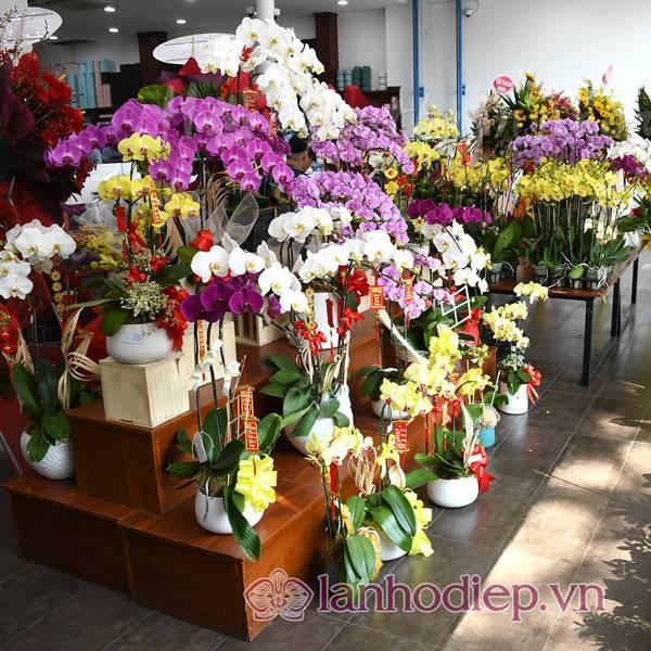 Nơi Bán Hoa Lan Hồ Điệp Đẹp Tại Hà Nội