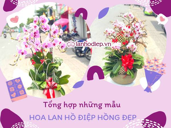 Tong Hop Nhung Mau Hoa Lan Ho Diep Hong Dep Dac Sac